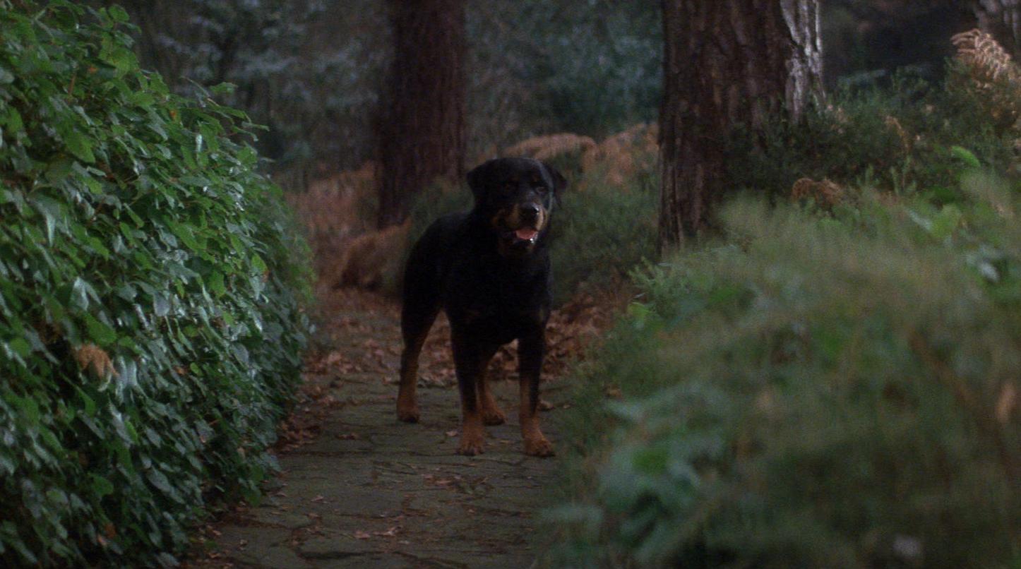 Dog In Omen Movie