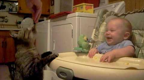 Cat Snack Makes Baby Laugh