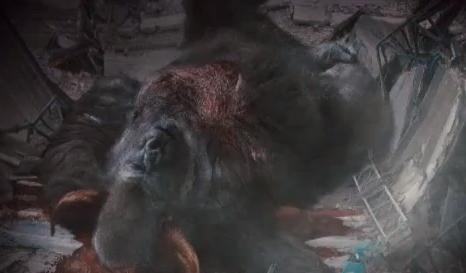 Wikipedia large ape sperm