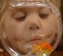 Martin the Goldfish