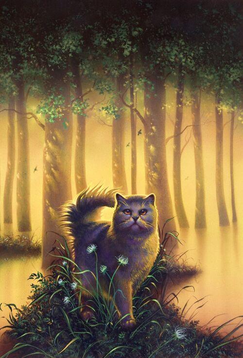 odd cat sanctuary