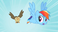 Rainbow Dash Owlowiscious 1 S02E07