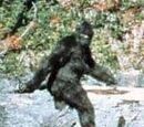 The Bigfoot Sighting