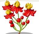 Blood Flower