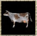 Brown-White Cow.jpg