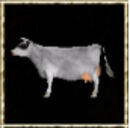 White Cow.jpg
