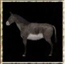 Wild Donkey.jpg