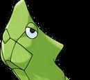 Cocoon Pokemon