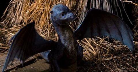 Baby Saphira From Eragon