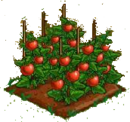 Tomato 100.png