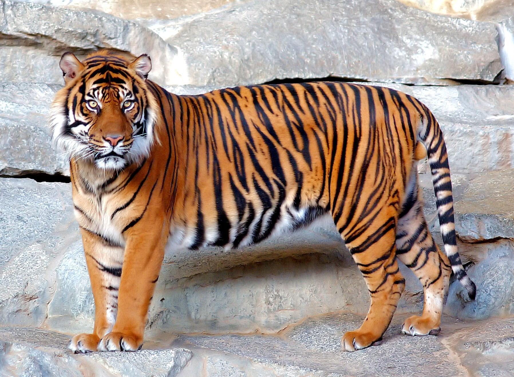 Fotos de portada tigres 5