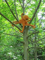 pacific northwest tree octopus  ... cryptidz.wiki...