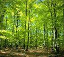 Zwierzęta lasów