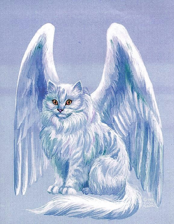 http://img1.wikia.nocookie.net/__cb20130525040741/warriorsofmyth/images/7/74/Winged_cat,_blue.jpg