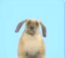 Rabbit Dog KPopp