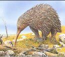 Млекопитающие Австралии
