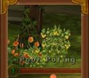 Poor Poring