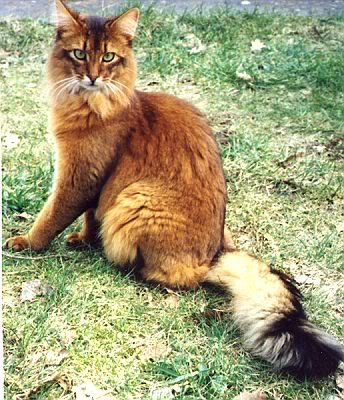 Warrior Cats Maple Leaf