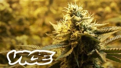 Canada's War on Weed
