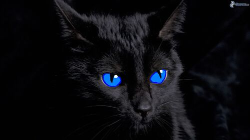 Cat With Red Eyes And Glow
