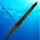 Barracuda water.jpg