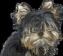 Psy i szczeniaki Wiki