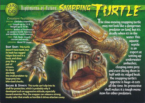 Snapping Turtle - Wierd N'wild Creatures Wiki