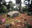 Balkan mixed forests (PA0404)