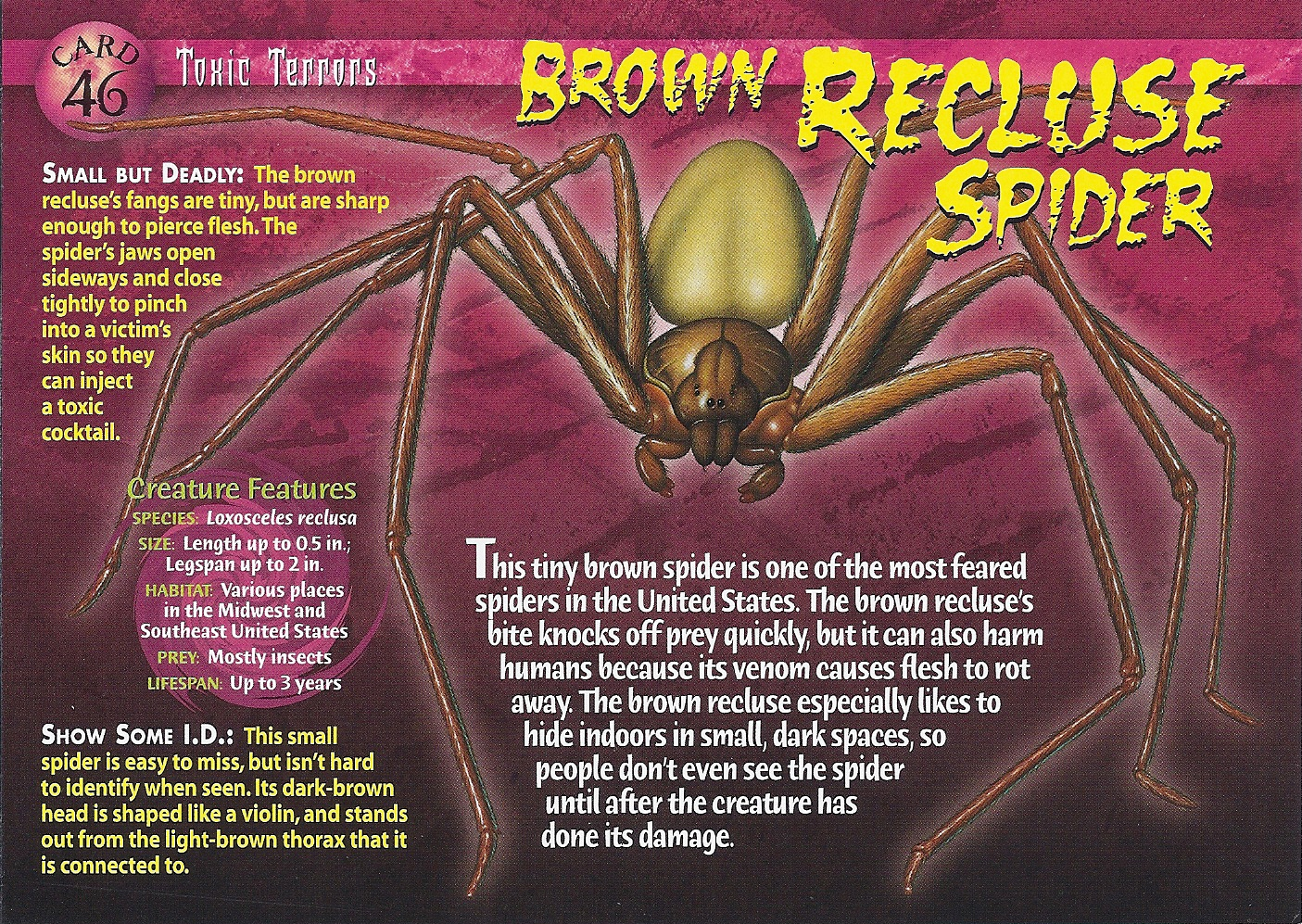 Recluse Brown recluse spider toxic   1405 x 997 jpeg 1431kB