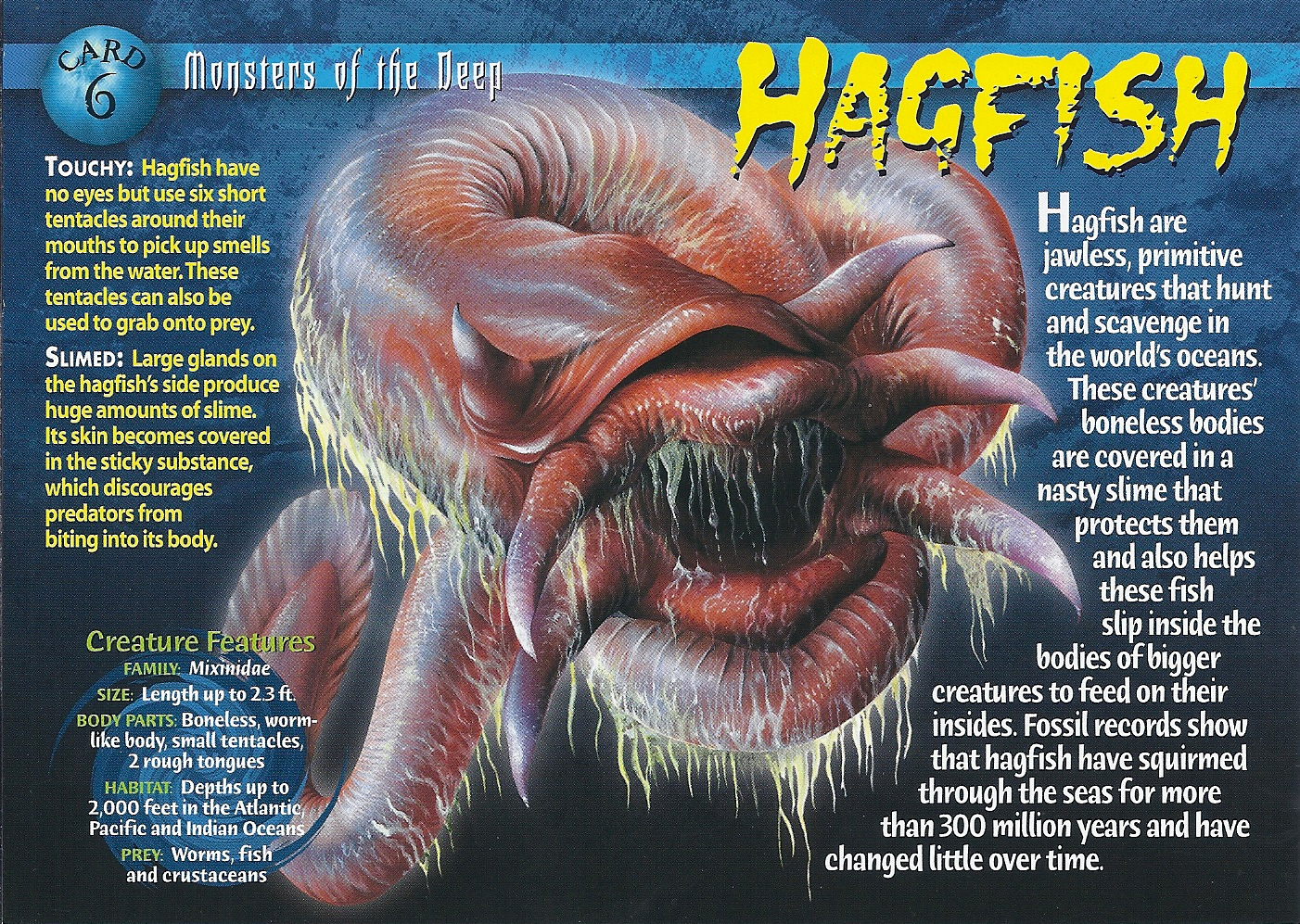hag fishes Hag ish (hăg′fĭsh′) n pl hagfish or hag ish s any of various elongated slimy marine fishes of the class myxini (family myxinidae), lacking jaws and vertebrae and.