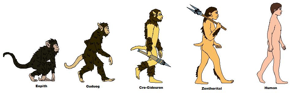 Human evolution - photo#27