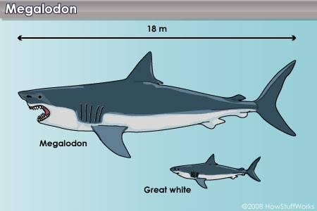 Predator X vs. Megalodon