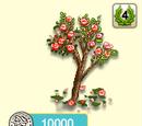 Mandelbaum rote Blüte