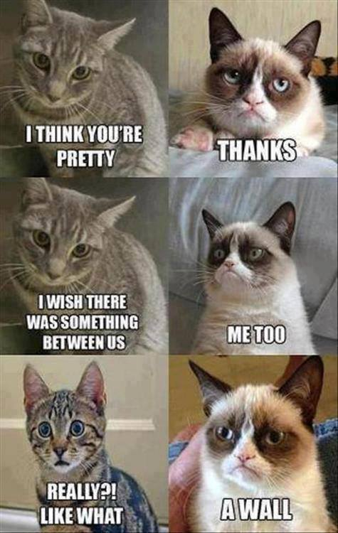 Comic Pictures of Cats Image Funny-cat-meme-comic