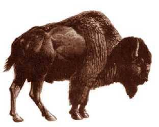 Bison antiquus wiki - photo#5