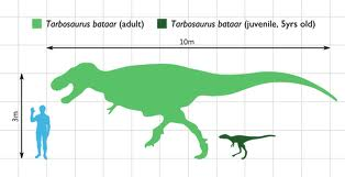 Tarbosaurus theropods wiki for 57 square meters to feet