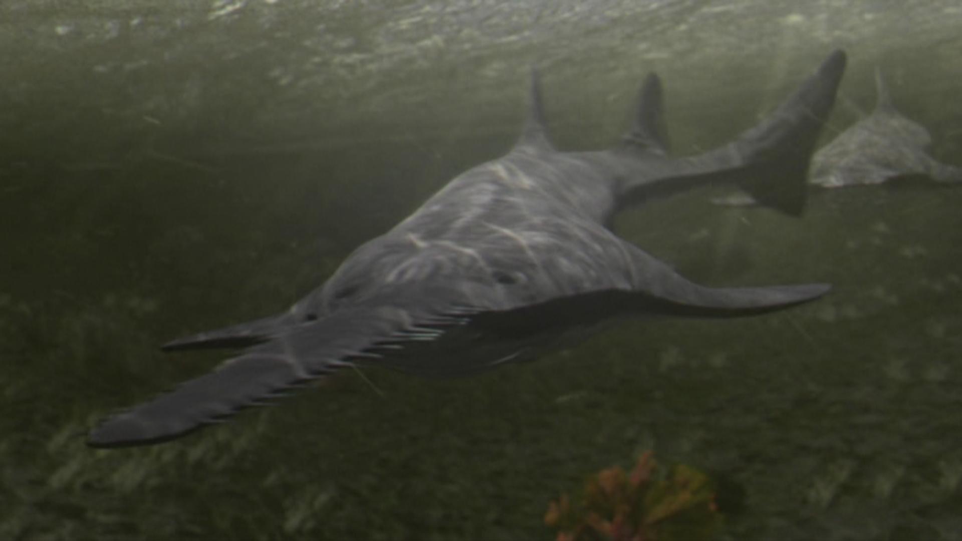Onchopristis - Planet Dinosaur Wiki