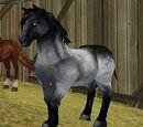Jorviksches Pony