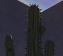Cactus, Style 3