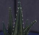 Cactus, Style 4