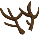 Bois de renne
