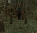 Images of Lofty John's bush