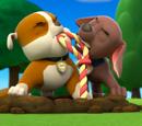 Zuma/Gallery/Pups Save a Toof