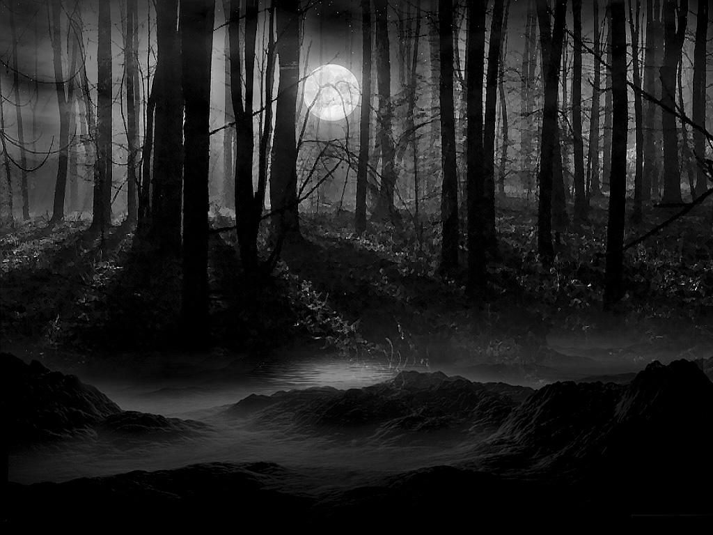 http://img1.wikia.nocookie.net/__cb20140320195330/doctorwhofanon/images/6/61/Dark_Forest.jpg