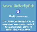 Azure Butterflyfish