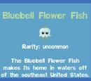 Bluebell Flower Fish