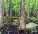 Dithering Swamp