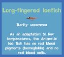 Long-fingered Icefish