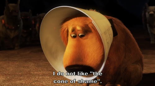 [Image: Cone_of_Shame.png]