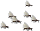Army of Ants.png